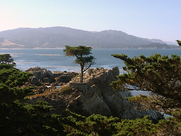 Lone Cypress in Pebble Beach, CA